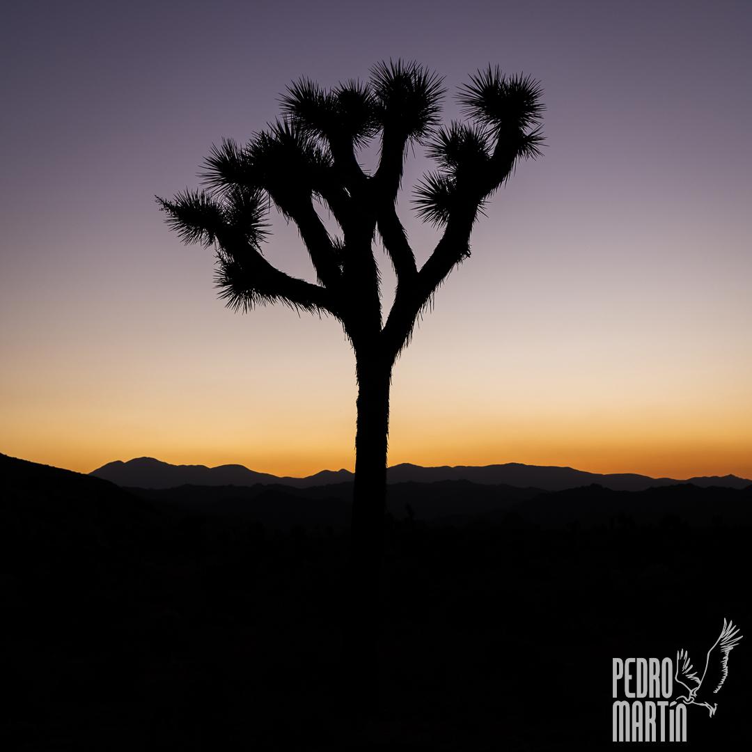 Crepúsculo en Joshua Tree N.P.