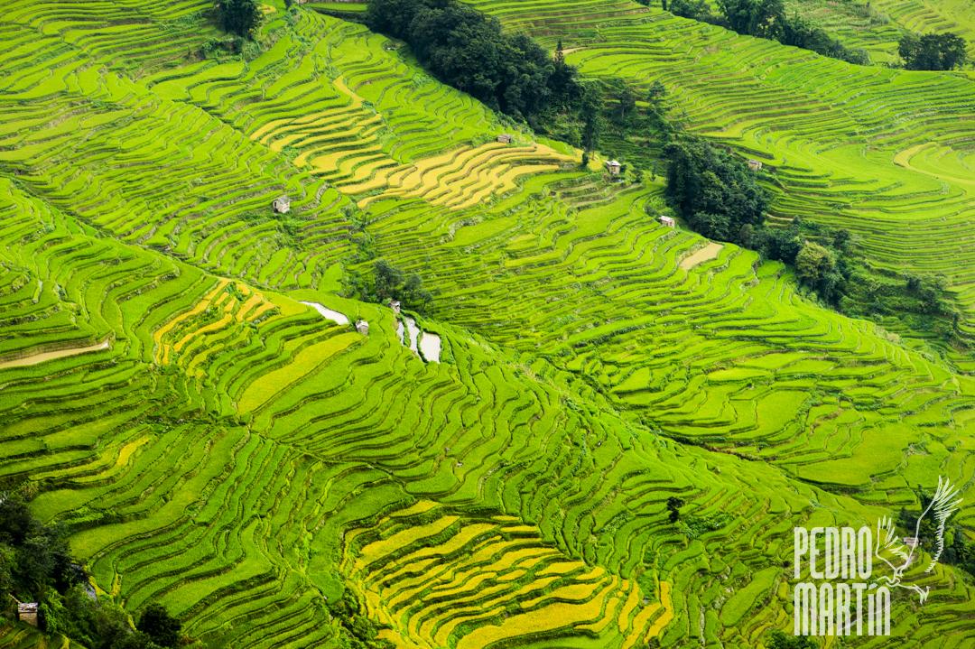 Terrazas de arroz cercanas a Yuanyang